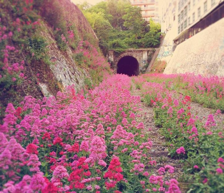 pinktunnel
