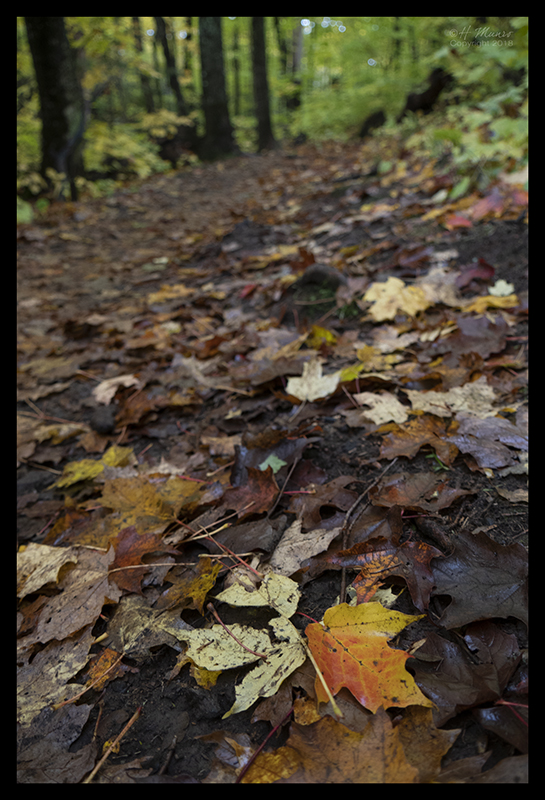 fall-color-1350504-blog