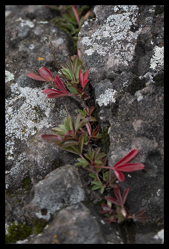 lichen-and-moss-1350613-blog