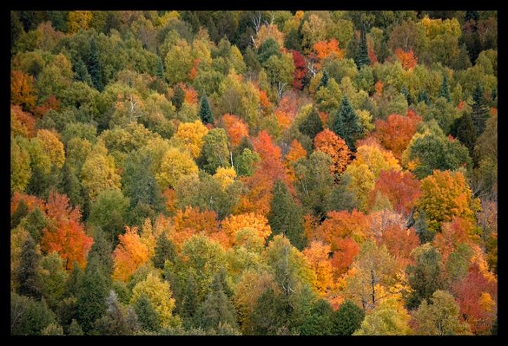 oberg-mountain-vista-1350518-blog