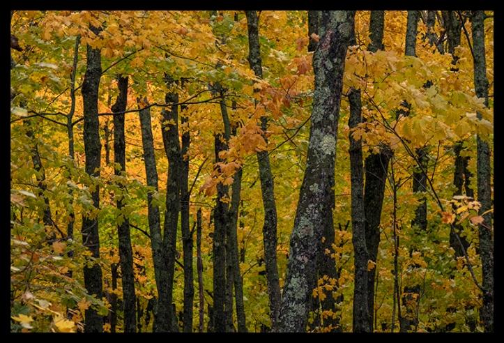 oberg-mountain-woods-1350224-blog