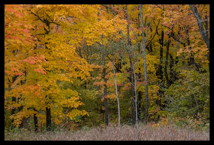 oberg-mountain-woods-1350395-blog
