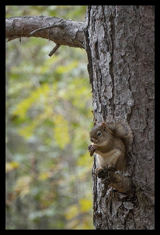 superior-squirrel-1350664-blog