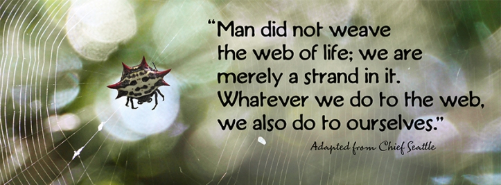 Web of life FB COVER