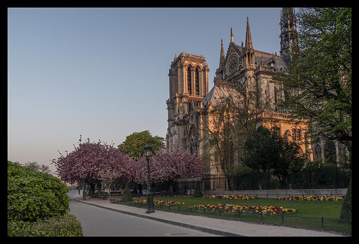 Notre Dame in bloom 1110778 BLOG
