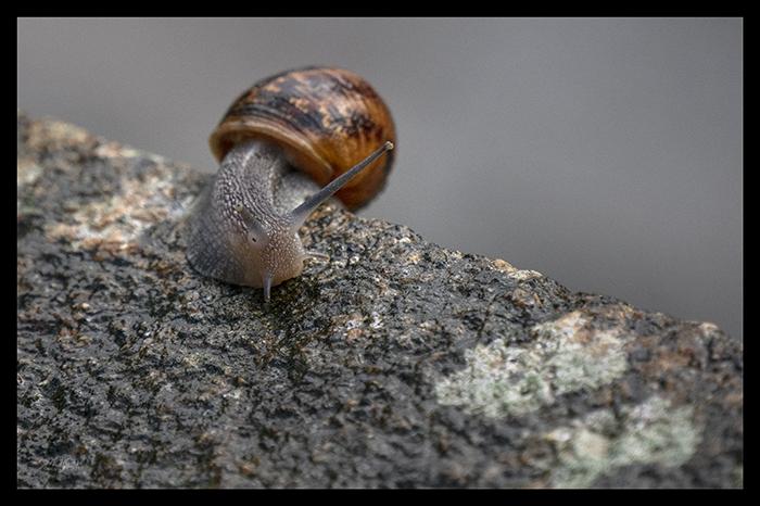Snail Mont St Michel 1500135 CR BLOG