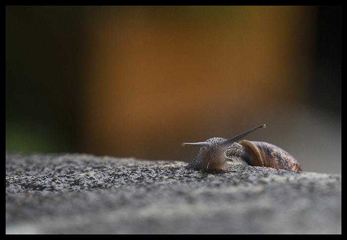 Snail 1500133 BLOG