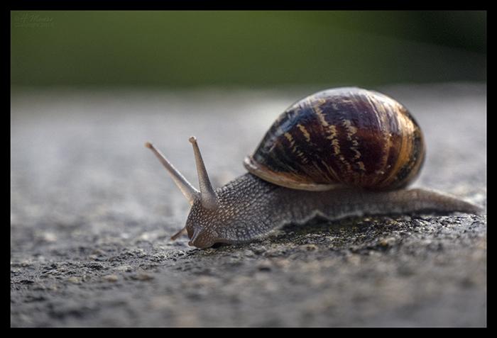 Snail Mont St Michel 1500105 BLOG