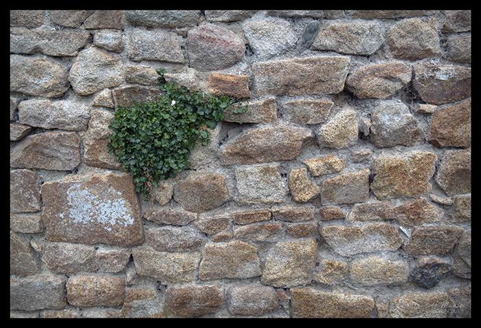 Mont St Michel wall 1490255 BLOG