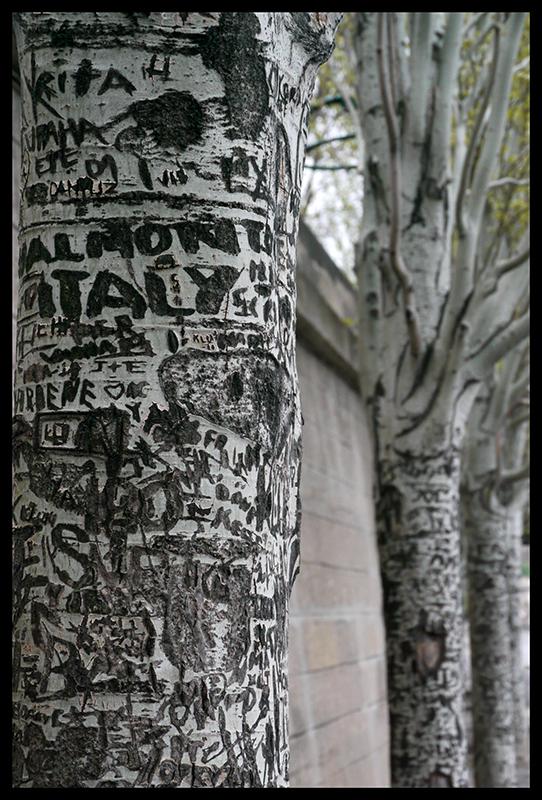 Seine trees 1130330 BLOG